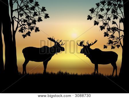 illustration of two moose in forest at sunrise poster