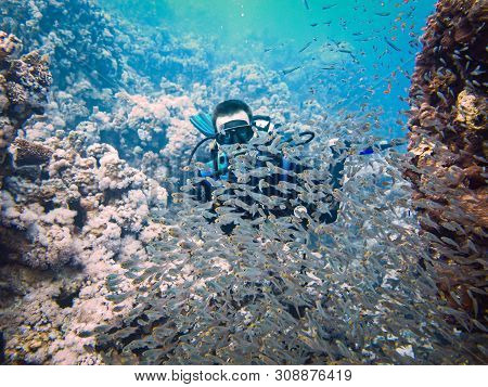 Scubadiving in Red Sea, Egypt, Sinai peninsula poster