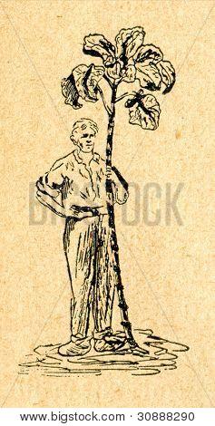 Grönkål - gammal illustration av okänd konstnär från Botanika Szkolna na Klasy Nizsze, författaren Jo
