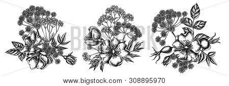 Flower Bouquet Of Black And White Dog Rose, Valerian, Angelica Stock Illustration