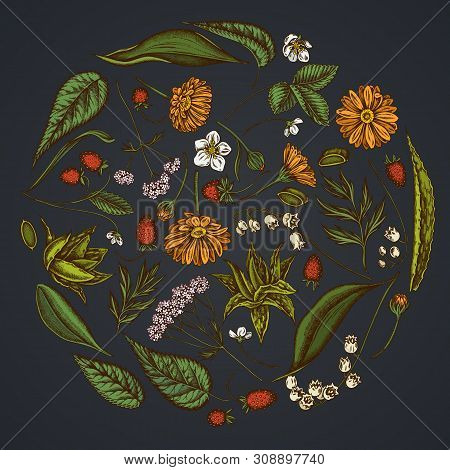 Round Floral Design On Dark Background With Aloe, Calendula, Lily Of The Valley, Nettle, Strawberry,