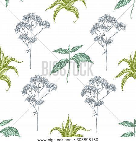 Seamless Pattern With Hand Drawn Pastel Aloe, Nettle, Valerian Stock Illustration