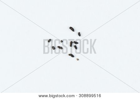 Feces Of Green Grasshopper Isolated On White Background Closeup