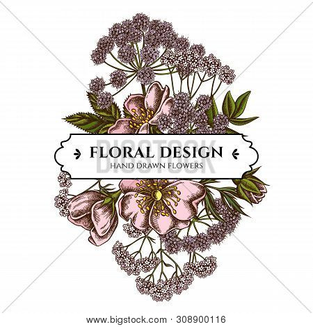 Floral Bouquet Design With Colored Dog Rose, Valerian, Angelica Stock Illustration