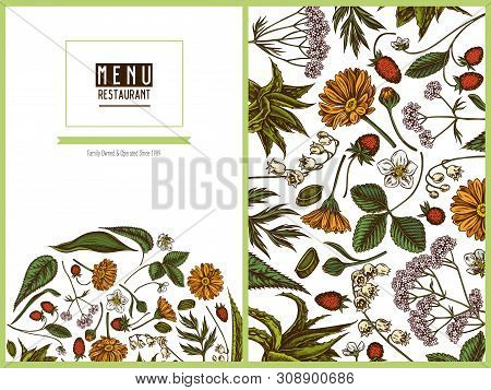 Menu Cover Floral Design With Colored Aloe, Calendula, Lily Of The Valley, Nettle, Strawberry, Valer