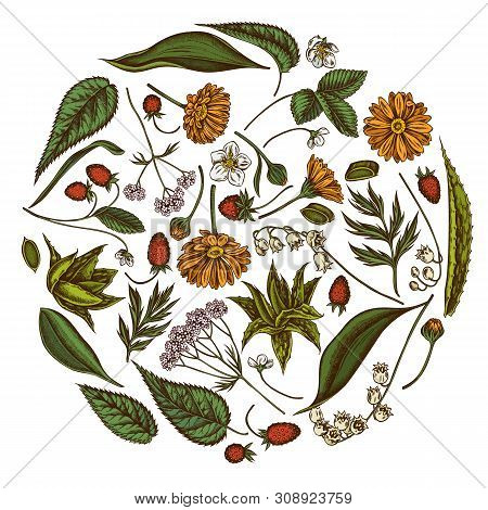 Round Floral Design With Colored Aloe, Calendula, Lily Of The Valley, Nettle, Strawberry, Valerian S