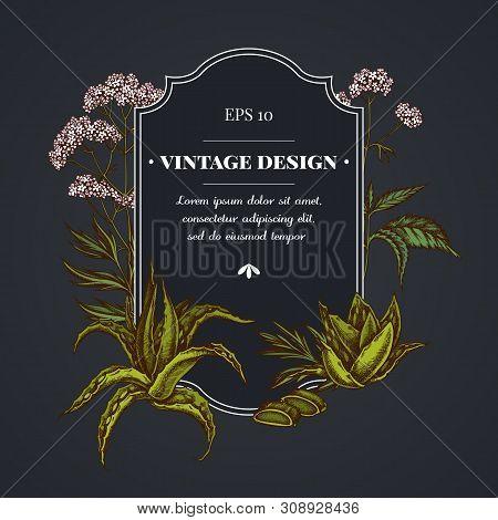 Dark Badge Design With Aloe, Nettle, Valerian Stock Illustration