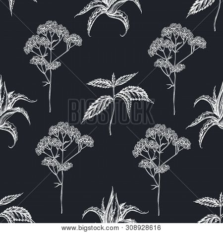 Seamless Pattern With Hand Drawn Chalk Aloe, Nettle, Valerian Stock Illustration