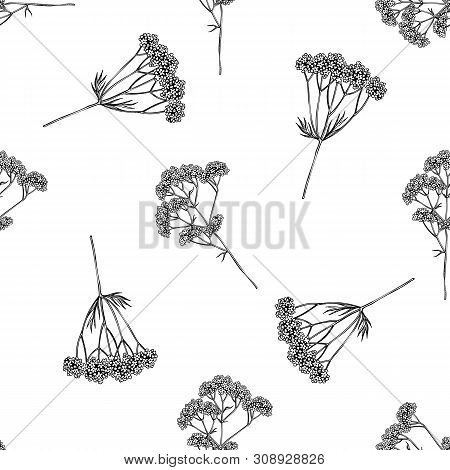 Seamless Pattern With Black And White Valerian Stock Illustration