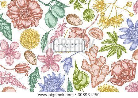 Floral Design With Pastel Almond, Dandelion, Ginger, Poppy Flower, Passion Flower, Tilia Cordata Sto