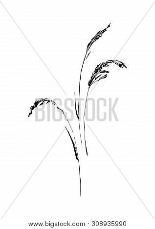 Hand Drawn Wild Herbs. Outline Plants Painting By Ink Pen. Sketch Or Doodle Style Botanical Vector I