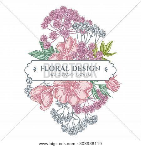 Floral Bouquet Design With Pastel Dog Rose, Valerian, Angelica Stock Illustration