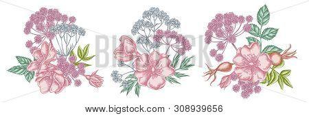 Flower Bouquet Of Pastel Dog Rose, Valerian, Angelica Stock Illustration