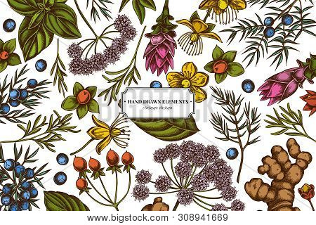 Floral Design With Colored Angelica, Basil, Juniper, Hypericum, Rosemary Turmeric Stock Illustration
