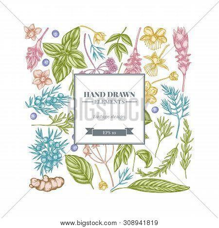 Square Floral Design With Pastel Angelica, Basil, Juniper, Hypericum, Rosemary, Turmeric Stock Illus