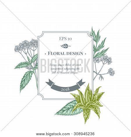 Badge Design With Pastel Aloe, Nettle, Valerian Stock Illustration