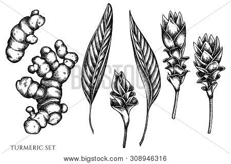 Vector Set Of Hand Drawn Black And White Turmeric Stock Illustration