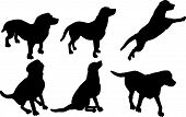 illustration with dog silhouettes isolated on white background poster