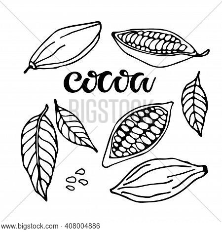 Cocoa Set. Hand Drawn Vector Cocoa Beans, Leaves Sketch And Cocoa Text On White Background. Organic