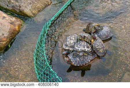Turtles Are Basking On Stone In Enclosure On Pond