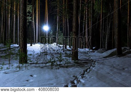 Coniferous Winter Forest At Night. There Is A Trail Of Footprints In The Snow. A Path Among Tall Pin