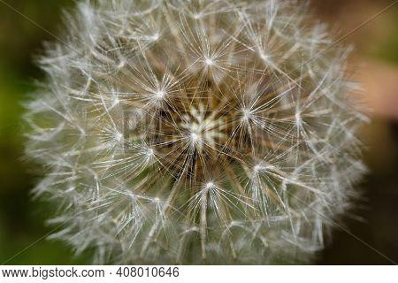 A Selective Focus Shot Of White Dandelion