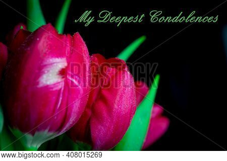 Pink Tulips On Black Background With Text Condolences