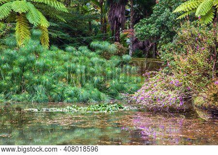 Enchanting Terra Nostra Botanical Garden in Furnas, Sao Miguel Island, Azores, Portugal