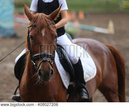 Unknown Competitor Riding On Show Jumper Horse On Equitation Event Summer Time. Show Jumper Horse Un
