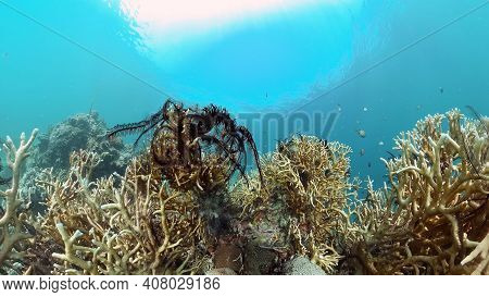 Tropical Coral Reef And Fishes Underwater. Tropical Fishes And Coral Reef Underwater. . Travel Vacat