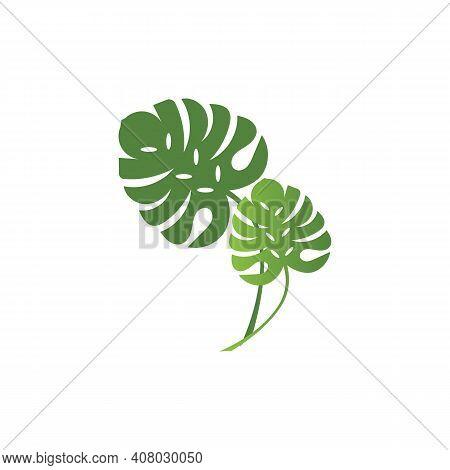 Monstera Deliciosa Leaf Logo Vector Template Illustration Design