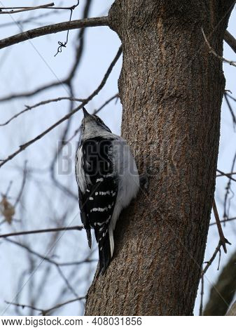 Colorful Woodpecker Bird Sitting On The Tree