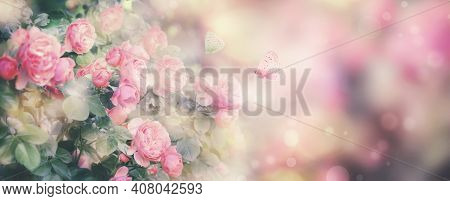 Summer Or Spring Natural Pink Background With Rose Flowers And Butterflies. Banner. Vintage Card Wit