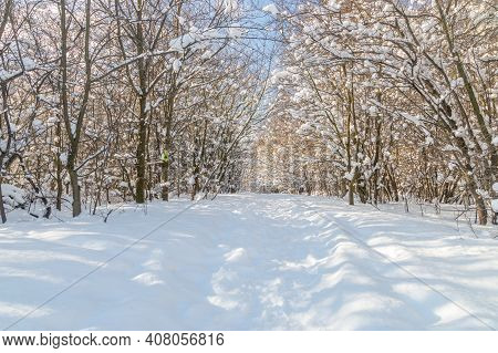 View Of Tree Grove At Winter Time.