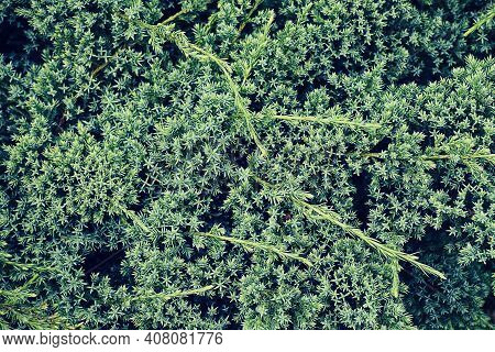 Green Texture Background. Wallpaper Leaf Surface Natural Green Plants Landscape, Ecology, Fresh Wall