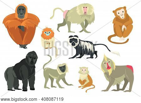 Variety Of Funny Exotic Monkeys And Apes Flat Set For Web Design. Cartoon Chimpanzee, Mandrill And G