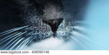 Black Nose Of A Cute Fluffy Gray Domestic Cat With A Long White Whiskers Close-up. Macro. The Sense