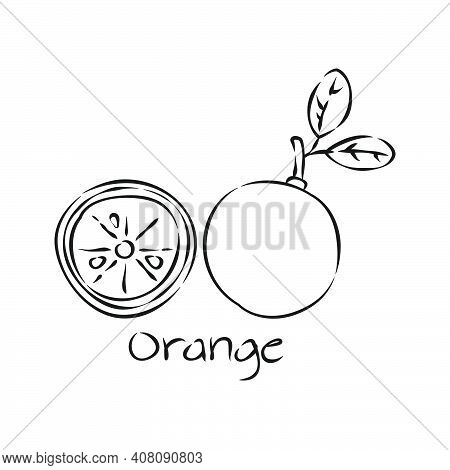 Black Citrus Hand Draw Fruit In Vintage Style On White Background. Line Art. Sketch Botanical Illust