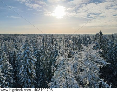 Drone Shot Of Trees Covered With Hoarfrost And Snow. Winter Forest Aerial View At Sunny Day. Top Vie