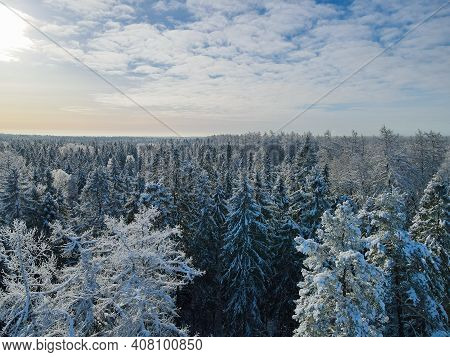 Sunny Winter Forest Aerial View At Sunny Day. Drone Shot Of Trees Covered With Hoarfrost And Snow. T