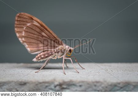 Side Photo Of A Moth Perched On The Wall