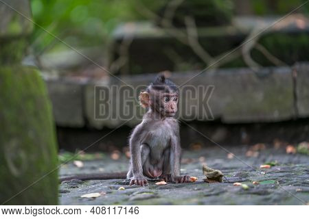The Baby Monkey Of Bali Alone Gazing Into The Distance At A Forgotten Temple Ubud Monkey Forest Sanc