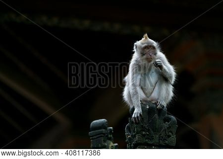 The Beauty Queen Or King Of The Ubud Monkey Forest Sanctuary In Bali Indonesia