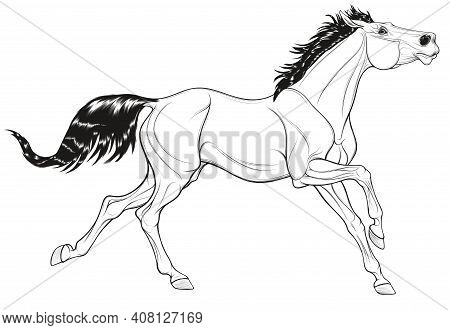 Linear Illustration Of A Thoroughbred Horse Galloping With Its Head Up. Running Stallion Laid Its Ea
