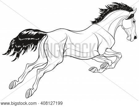 Linear Image Of A Jumping Stallion Arched Its Neck. Leaping Horse Pricked Up Its Ears. Vector Monoch