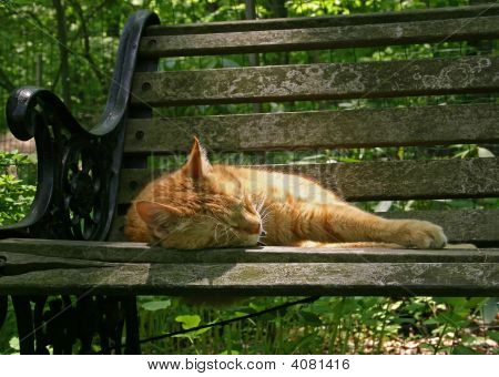 House Cat Sleeping On A Garden Bench