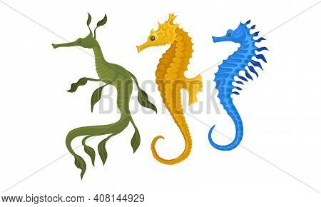 Sea Horse As Small Marine Fish With Bony Armour And Curled Prehensile Tail Vector Set