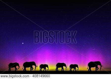 Elephant Family At Starry Night. Animal Silhouettes. Aurora Borealis