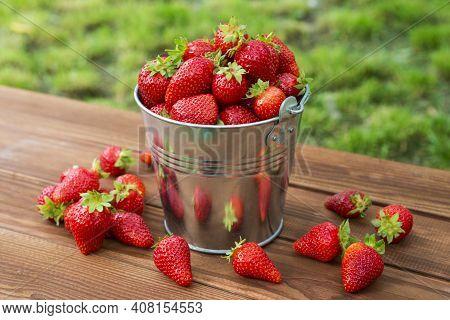 Bucket Of Freshly Picked Strawberries In Summer Garden. Ripe Juicy Strawberries In A Small Metal Buc