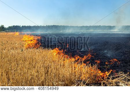 Wildfire On Wheat Field Stubble After Harvesting Near Forest. Burning Dry Grass Meadow Due Arid Clim